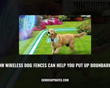 How Wireless Dog Fences Can Help You Put Up Boundaries
