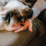 How to simplify dog care - 6 tips & tricks