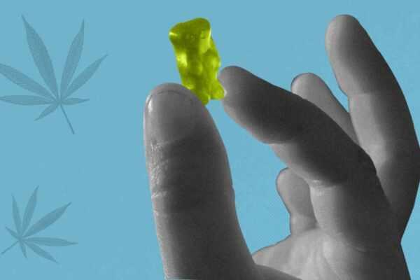 hemp gummies vs cbd gummies